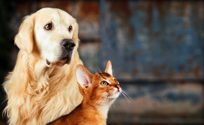 Pulgas e carrapatos como proteger seu pet