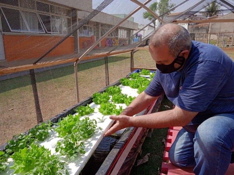 """Emei """"Nelson Bovo Neto"""" desenvolve projeto de estufa para horta hidropônica na instituição"""